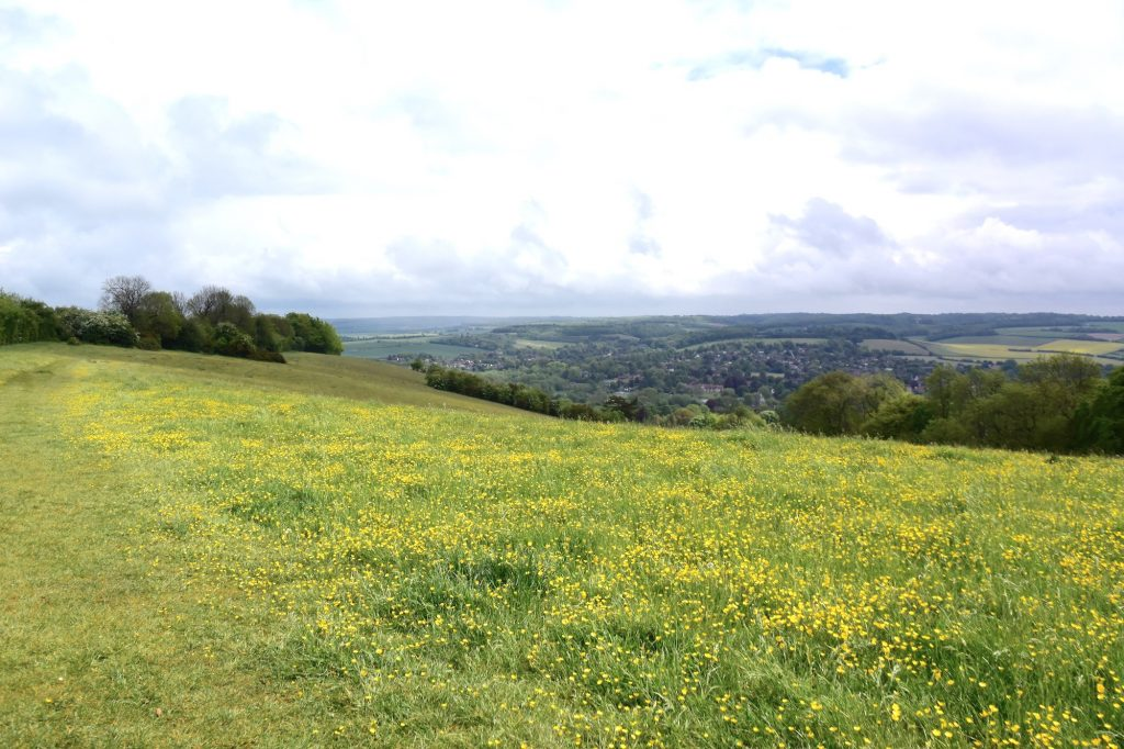 The beautiful Lardons Chase. Great views to be had across the Thames Valley, Streatley and Goring.