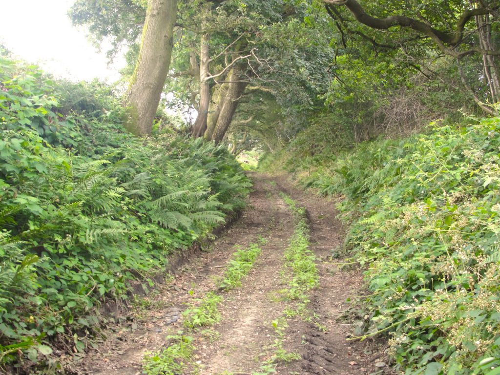 On the Hard Way (also known as the Harrow Way) ancient trackway near Kilmington Common, in Wiltshire. Did King Alfred the Great pass down here after he left Athelney en route to the Battle of Ethandun?
